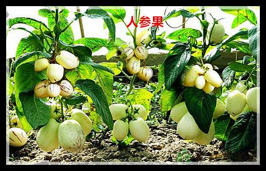 【原创】盘点奇异水果(二)_图1-3
