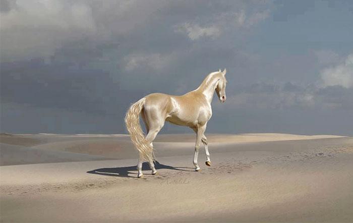 """你是否见过优雅漂亮的""""天堂马""""?_图1-2"""