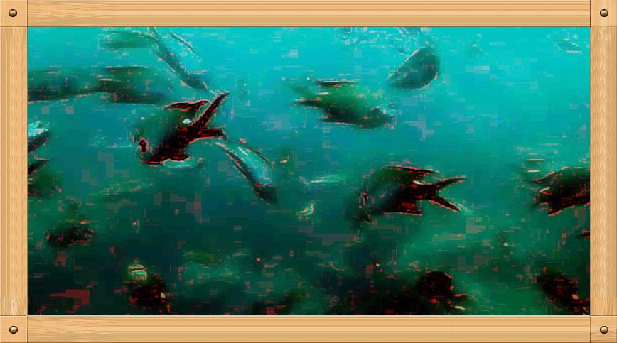 放飞情感《坐潜艇拍水下世界》_图1-8