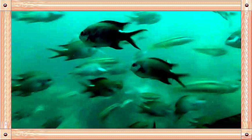 放飞情感《坐潜艇拍水下世界》_图1-7