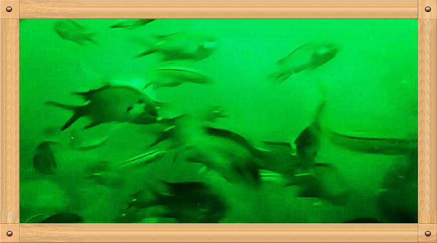 放飞情感《坐潜艇拍水下世界》_图1-11