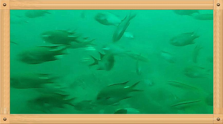 放飞情感《坐潜艇拍水下世界》_图1-10