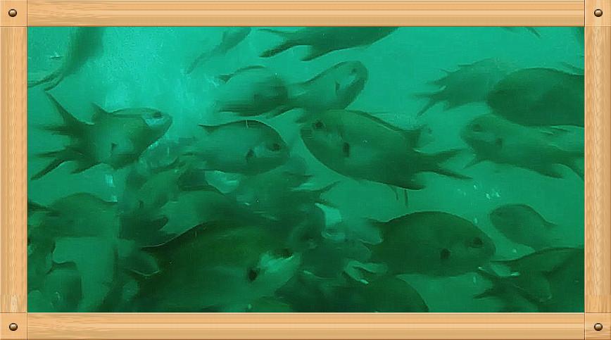 放飞情感《坐潜艇拍水下世界》_图1-9