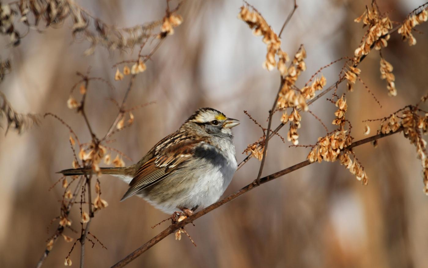 【田螺摄影】雪后去拍鸟随拍_图1-1