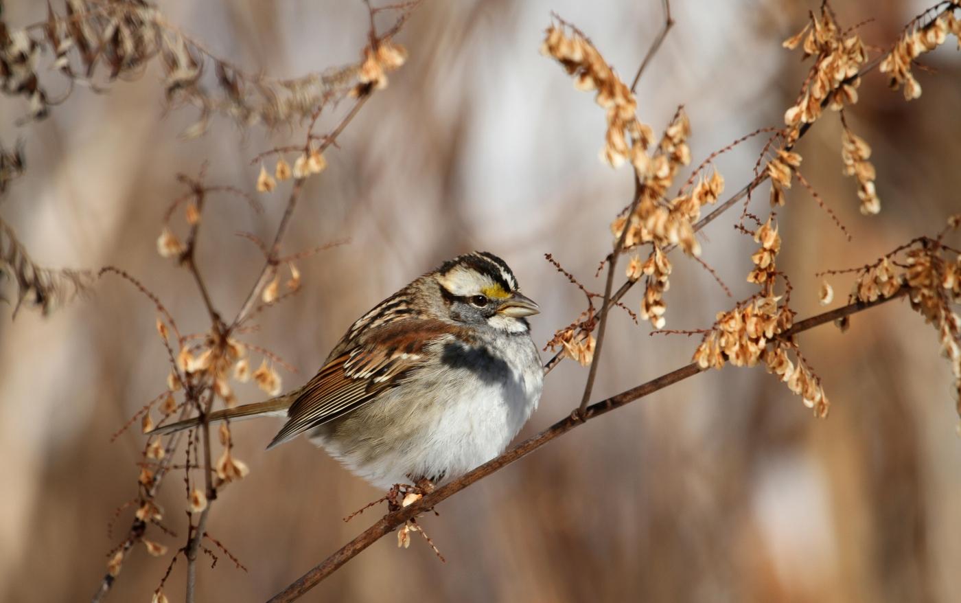 【田螺摄影】雪后去拍鸟随拍_图1-2