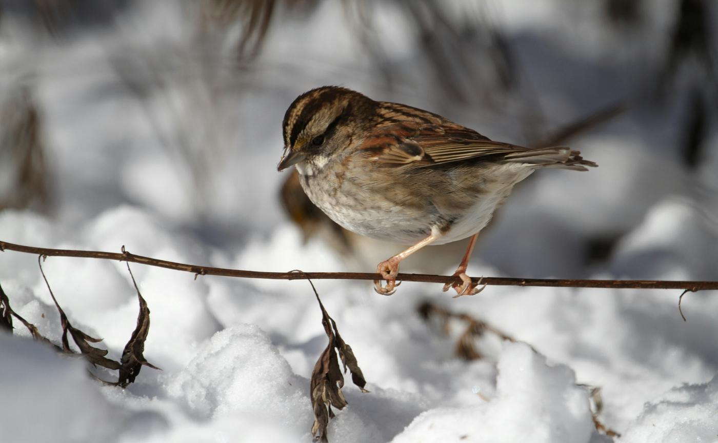 【田螺摄影】雪后去拍鸟随拍_图1-3