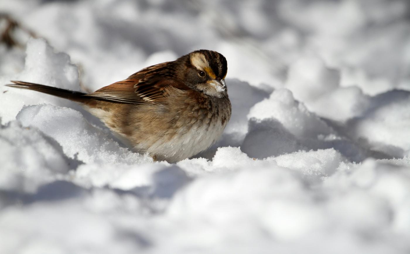 【田螺摄影】雪后去拍鸟随拍_图1-5