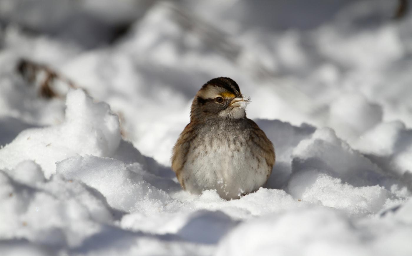 【田螺摄影】雪后去拍鸟随拍_图1-6