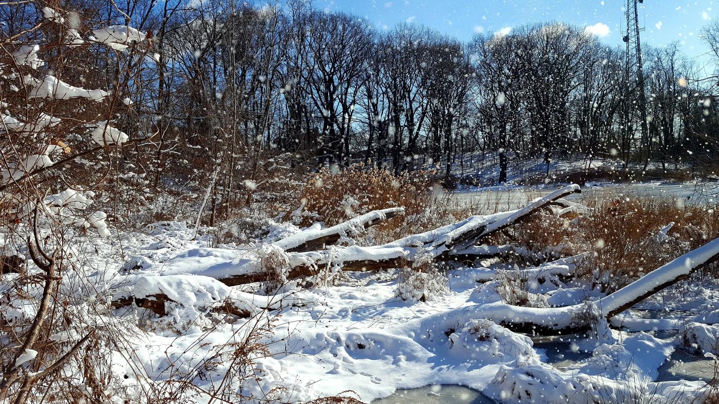 【田螺摄影】雪后去拍鸟随拍_图1-11