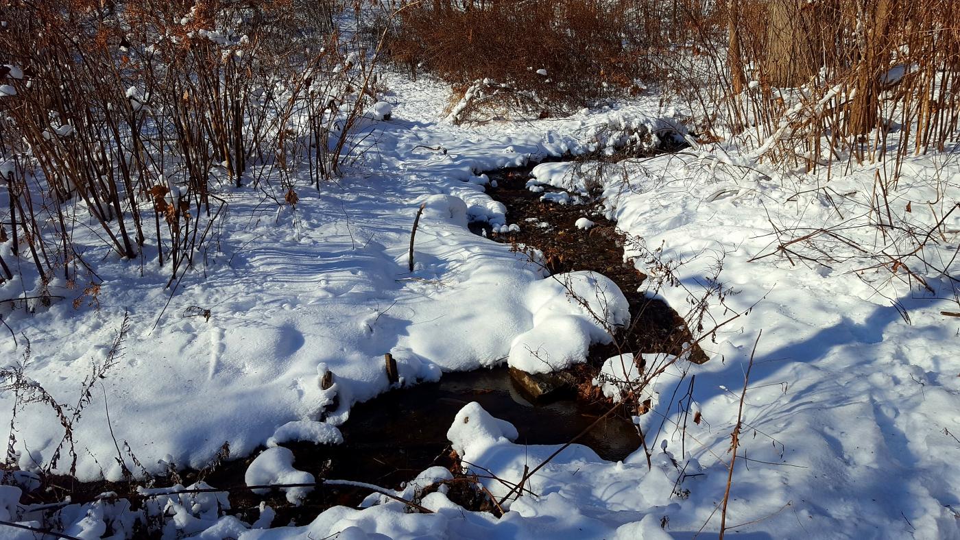 【田螺摄影】雪后去拍鸟随拍_图1-12
