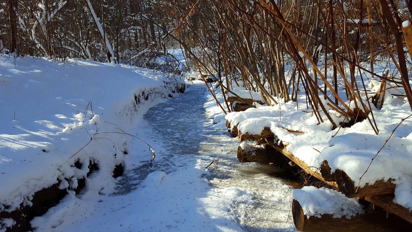 【田螺摄影】雪后去拍鸟随拍_图1-14