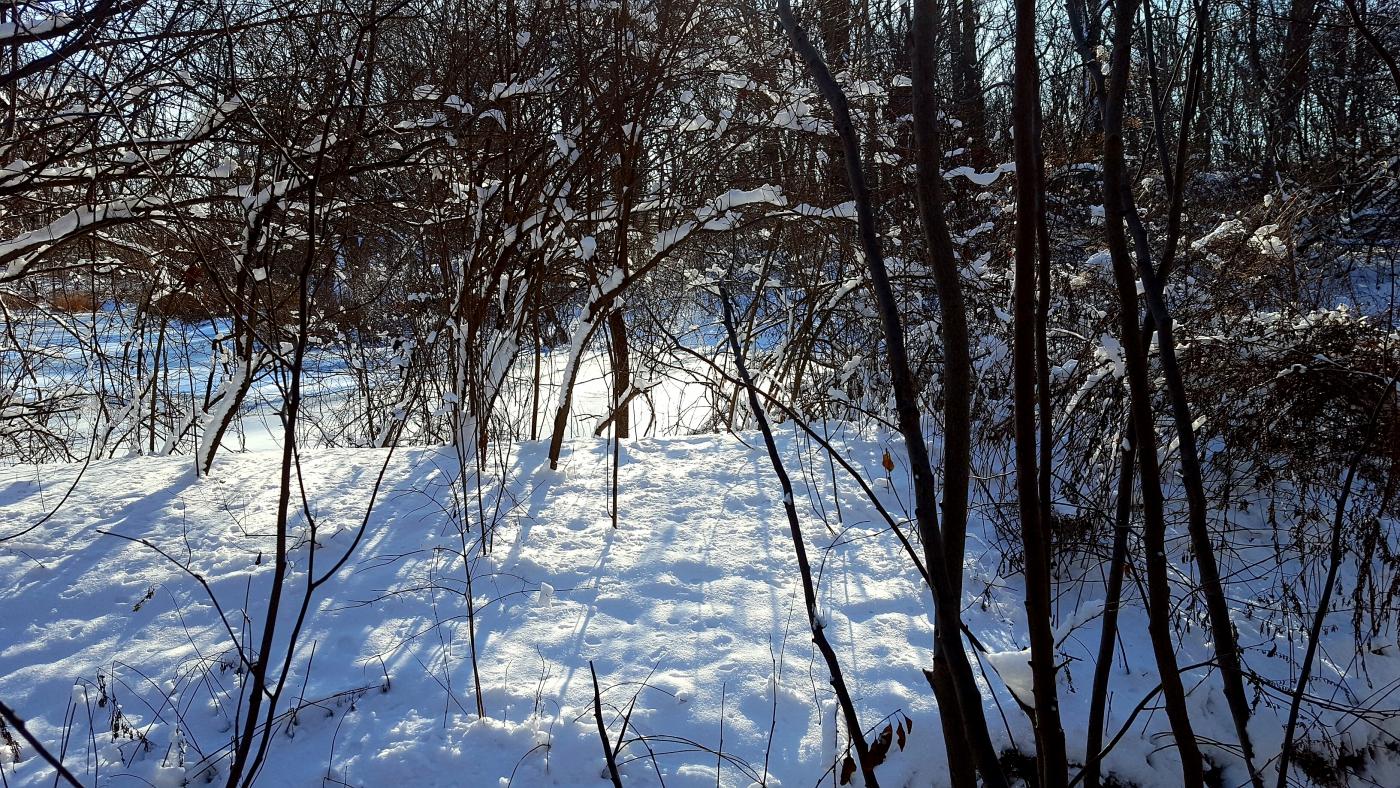 【田螺摄影】雪后去拍鸟随拍_图1-16