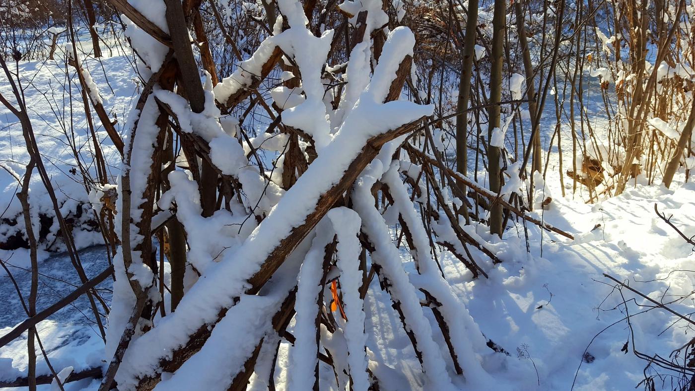 【田螺摄影】雪后去拍鸟随拍_图1-15