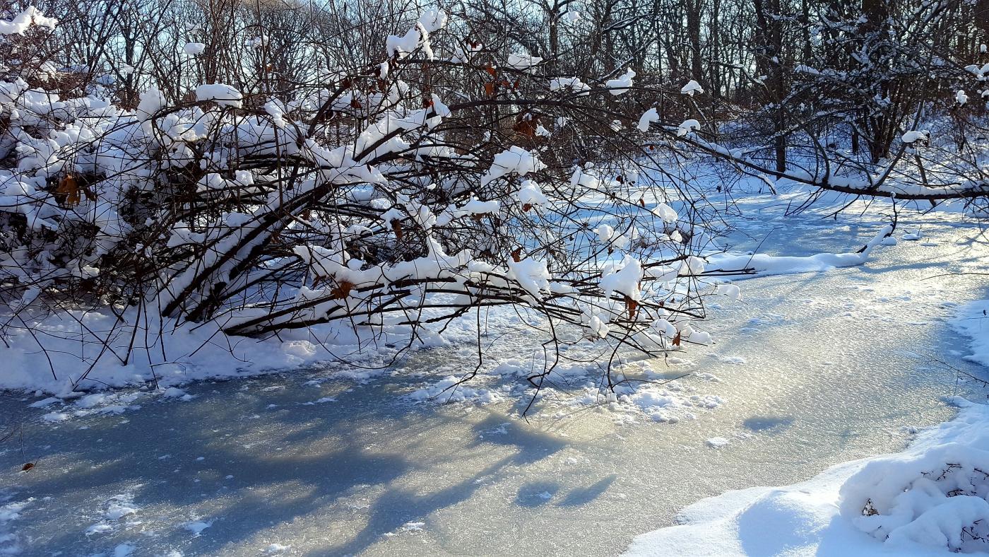 【田螺摄影】雪后去拍鸟随拍_图1-13