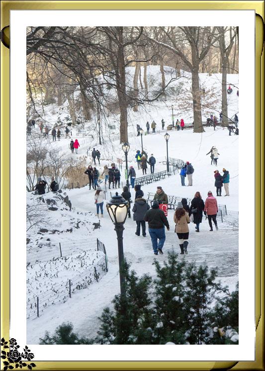 2017年第一次大雪——中央公园雪景_图1-2