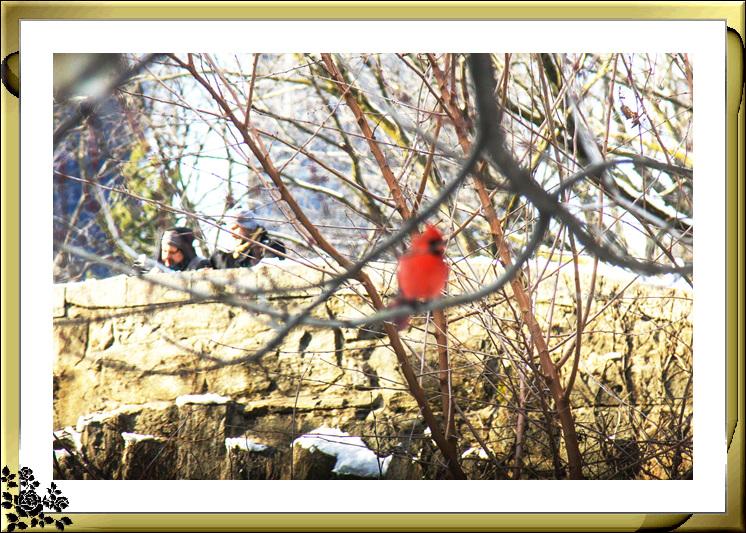 2017年第一次大雪——中央公园雪景_图1-15