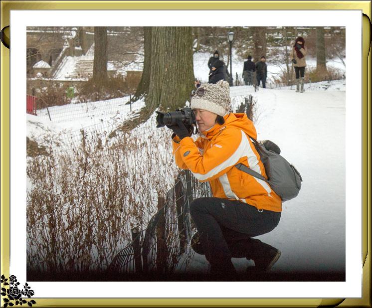 2017年第一次大雪——中央公园雪景_图1-21