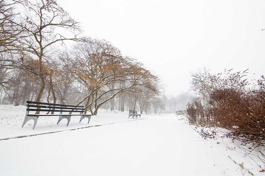 雪中即景_图1-5