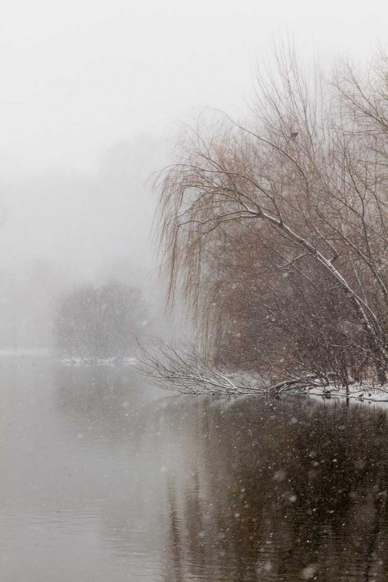 雪中即景_图1-7