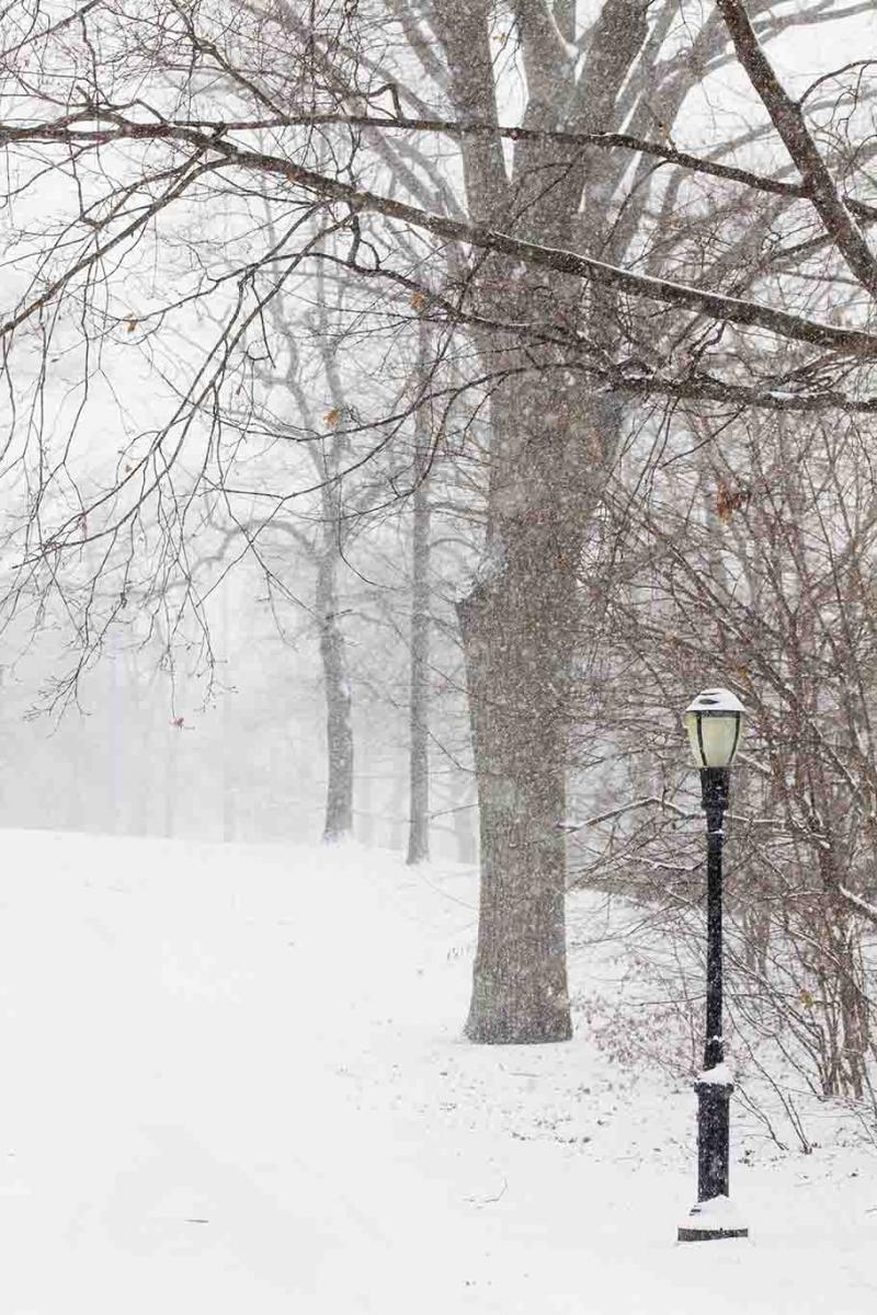 雪中即景_图1-8