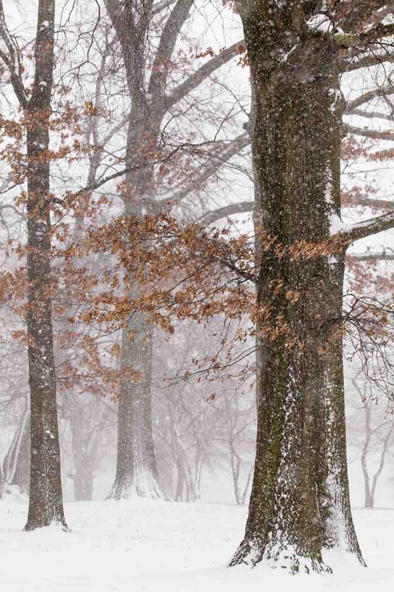 雪中即景_图1-9