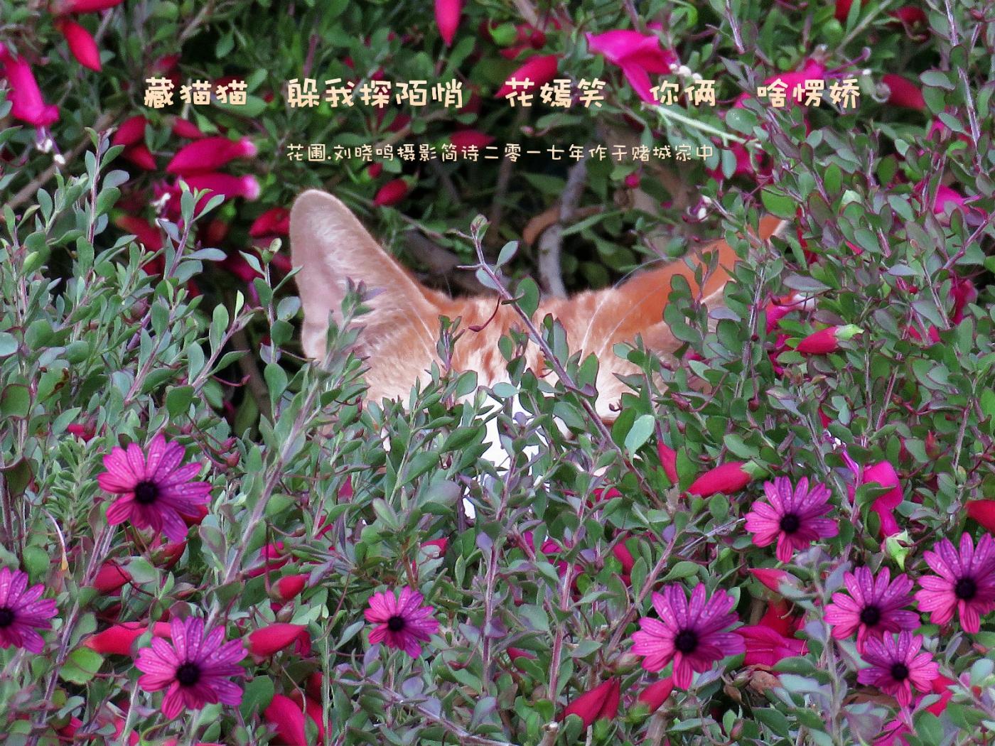 【摄影拼图】花猫躲咪咪_图1-2