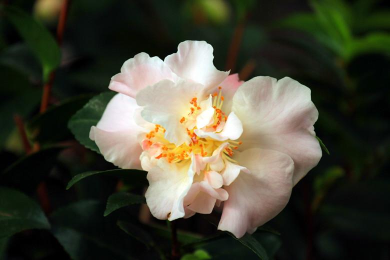 中山公园 唐花坞 鲜花盛开 春来早_图1-5