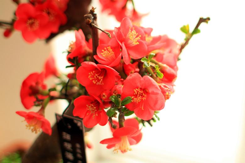 中山公园 唐花坞 鲜花盛开 春来早_图1-7