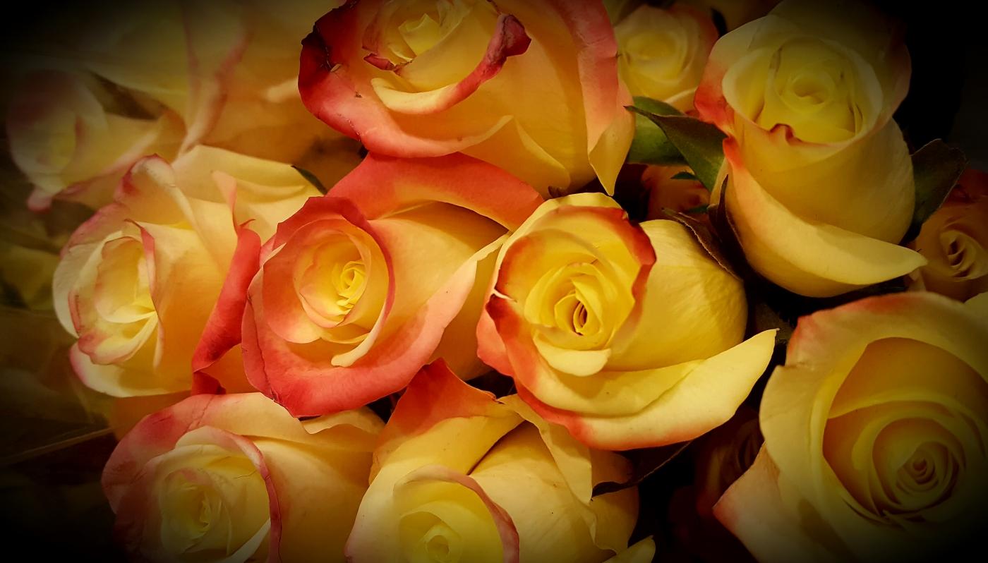 【田螺摄影】逛超市随拍情人节的玫瑰花_图1-1