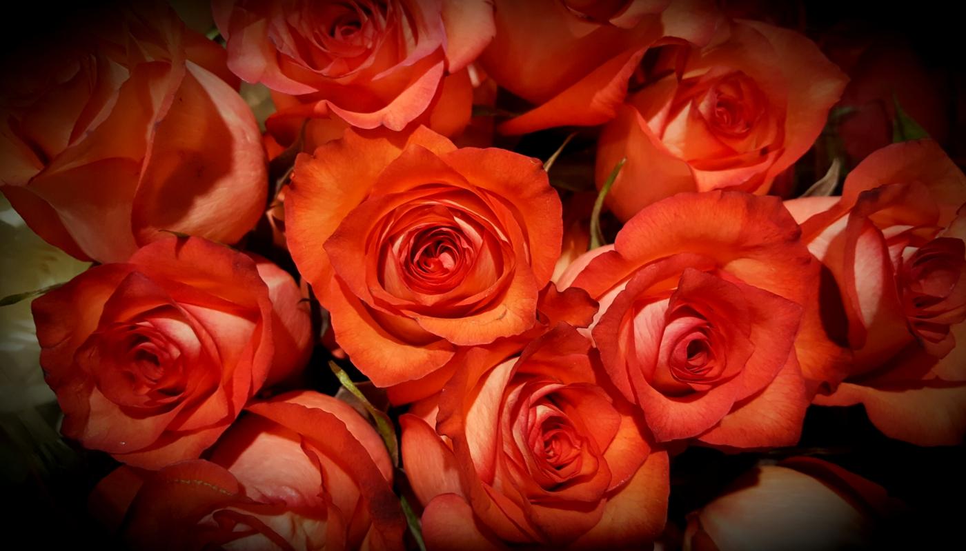 【田螺摄影】逛超市随拍情人节的玫瑰花_图1-5
