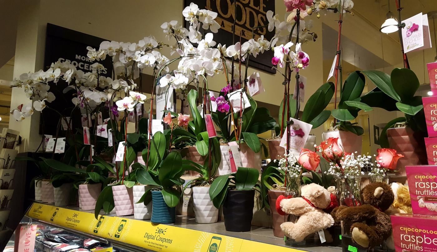 【田螺摄影】逛超市随拍情人节的玫瑰花_图1-21