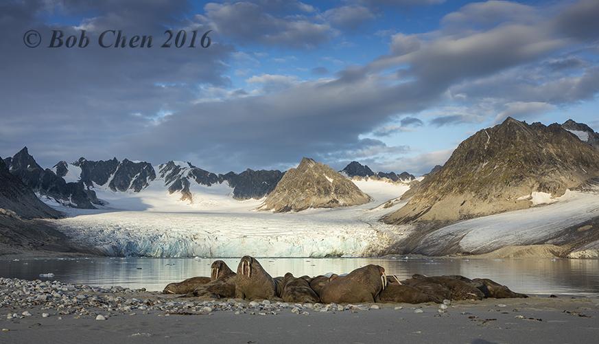 [海洋攝影] 北極風光_图1-2