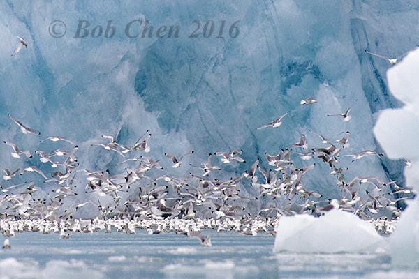 [海洋攝影] 北極風光_图1-5