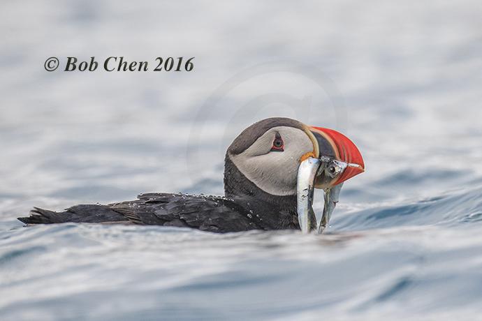 [海洋攝影] 北極風光_图1-10