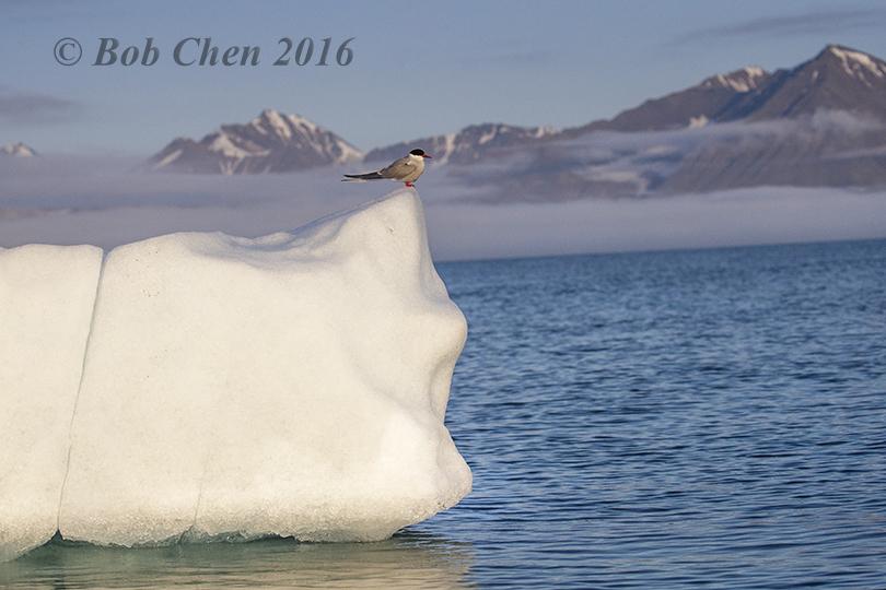 [海洋攝影] 北極風光_图1-12