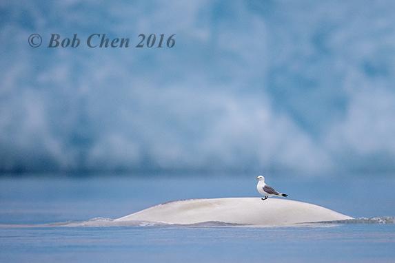 [海洋攝影] 北極風光_图1-15