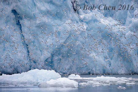 [海洋攝影] 北極風光_图1-17