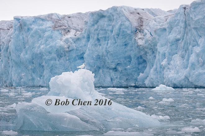 [海洋攝影] 北極風光_图1-18