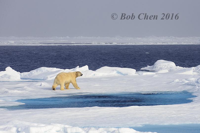 [海洋攝影] 北極風光_图1-26