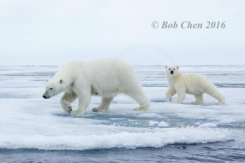 [海洋攝影] 北極風光_图1-32