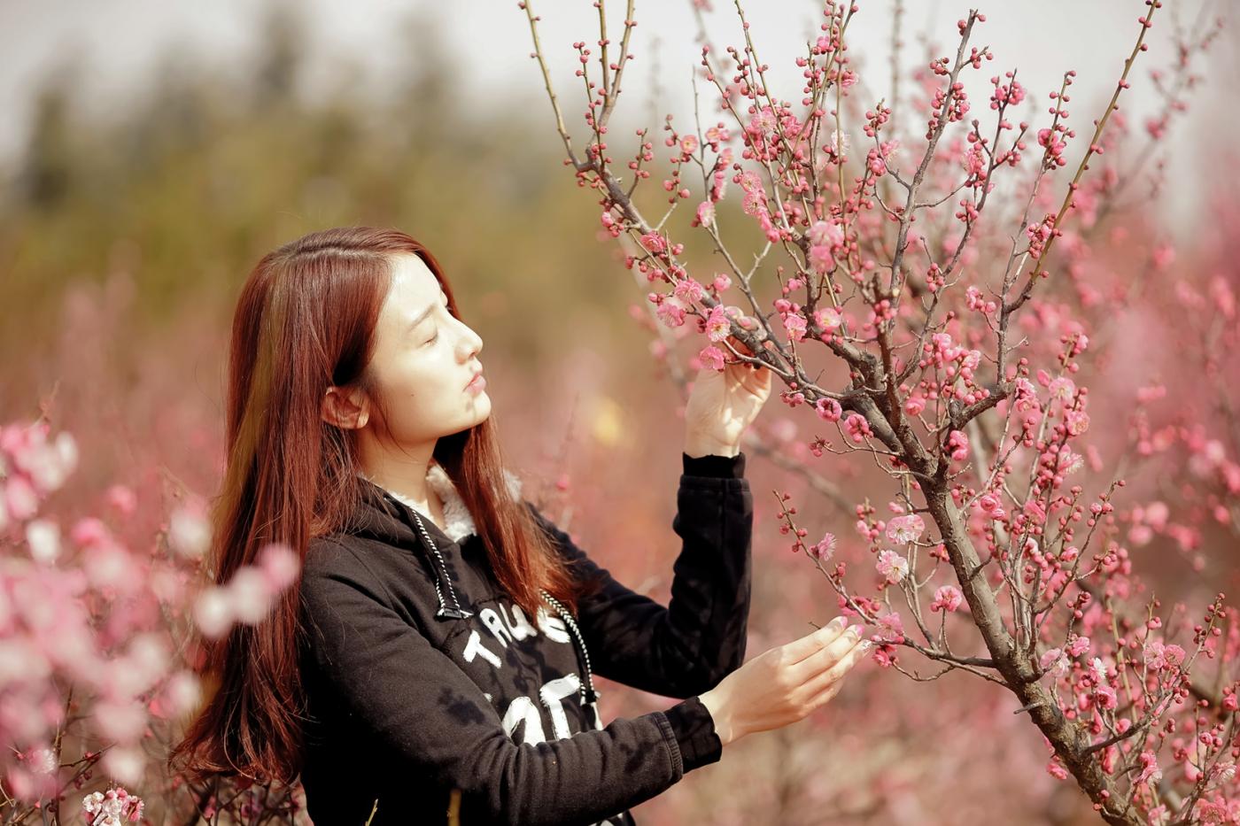 费县的春天从鲜花烂漫的梅林和女孩张诗奇的偶遇开始_图1-1