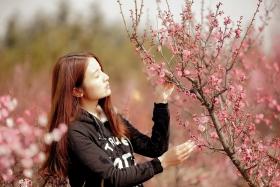 费县的春天从鲜花烂漫的梅林和女孩张诗奇的