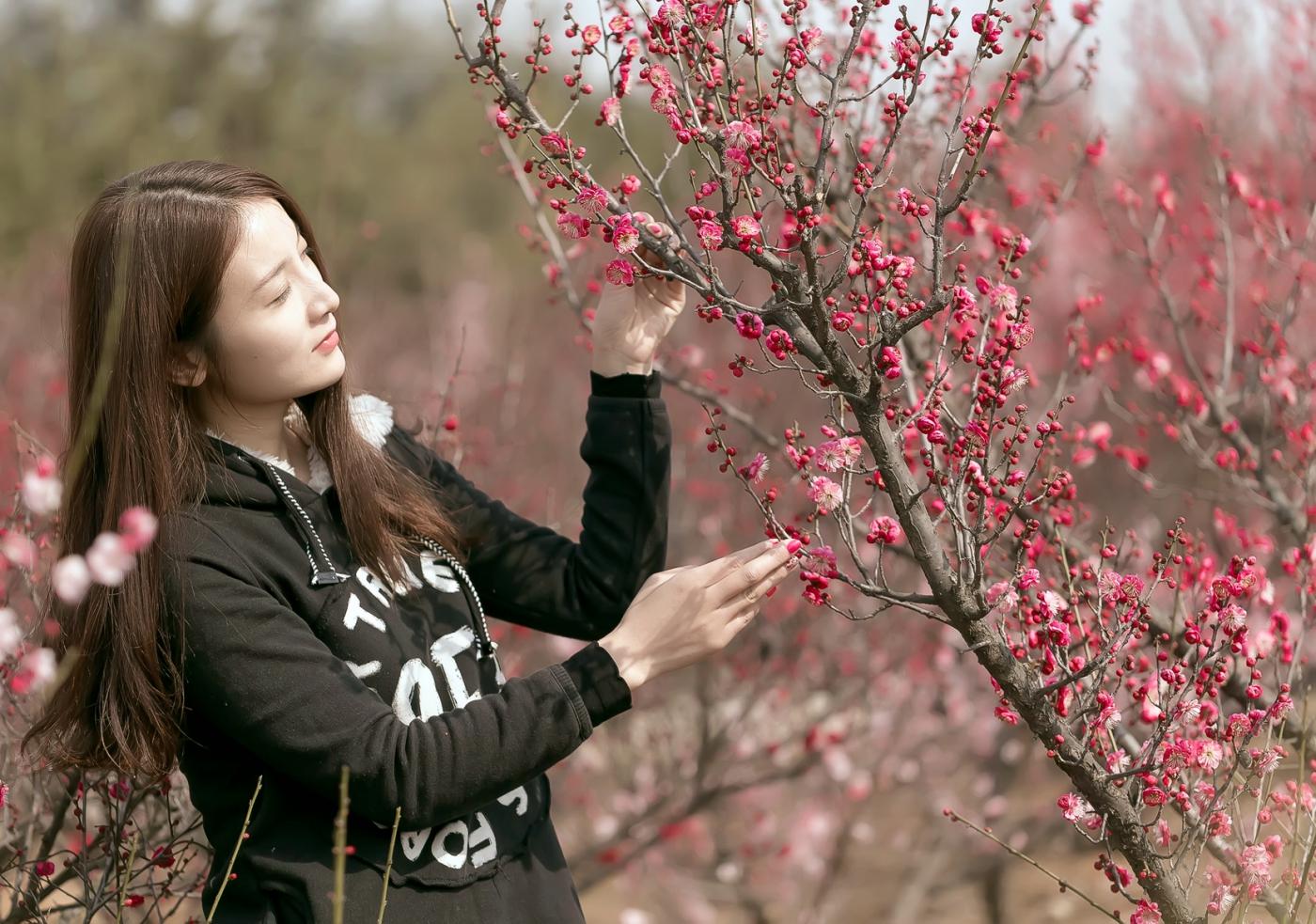 费县的春天从鲜花烂漫的梅林和女孩张诗奇的偶遇开始_图1-12