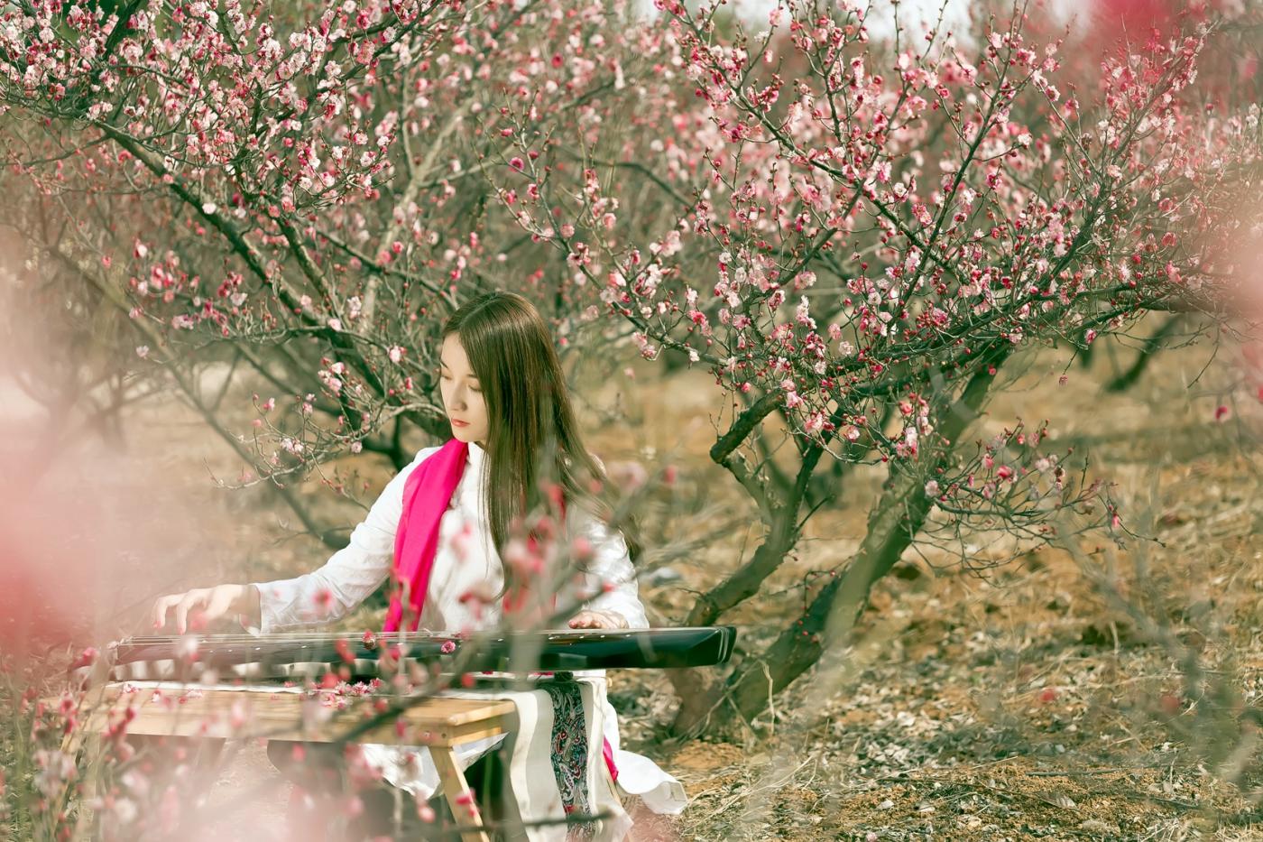 费县的春天从鲜花烂漫的梅林和女孩张诗奇的偶遇开始_图1-17