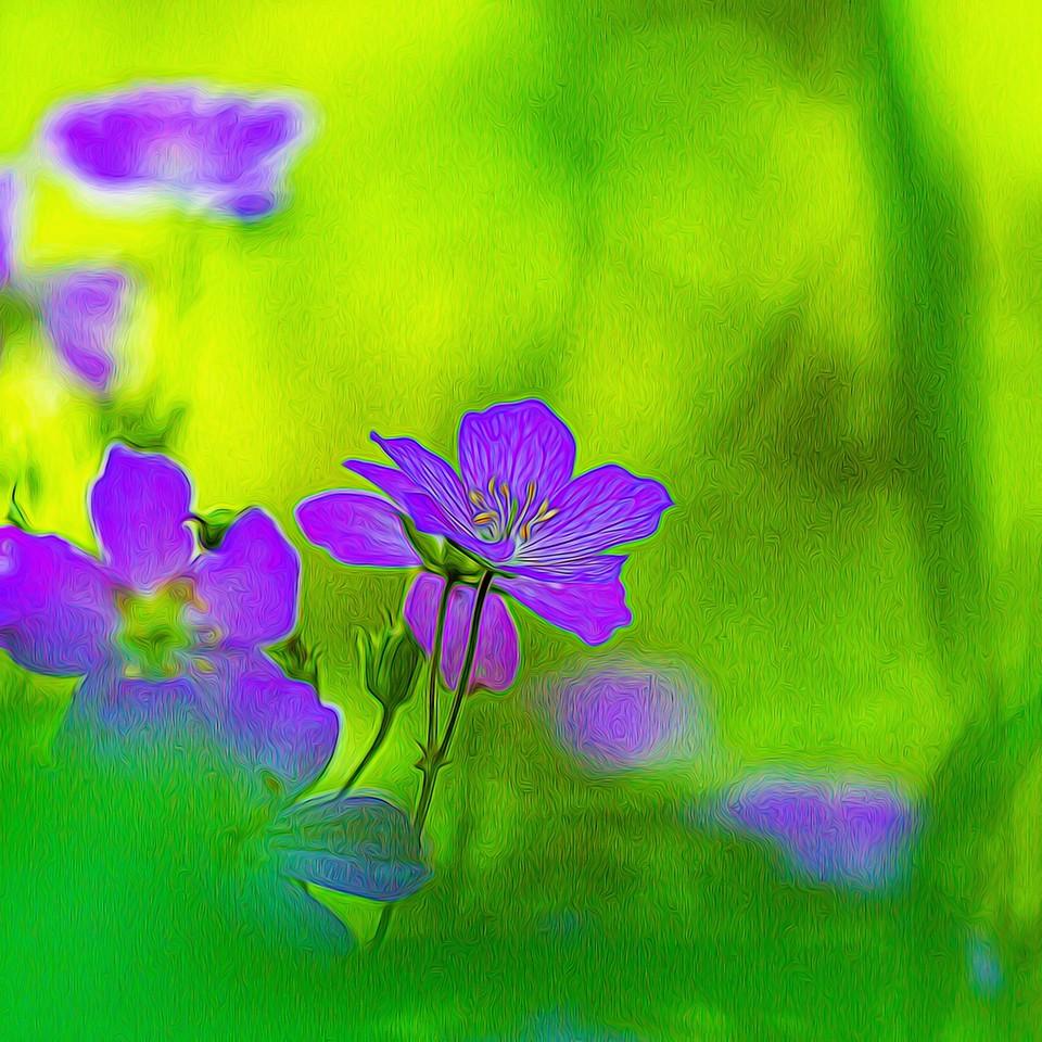 春色朦胧_图1-8