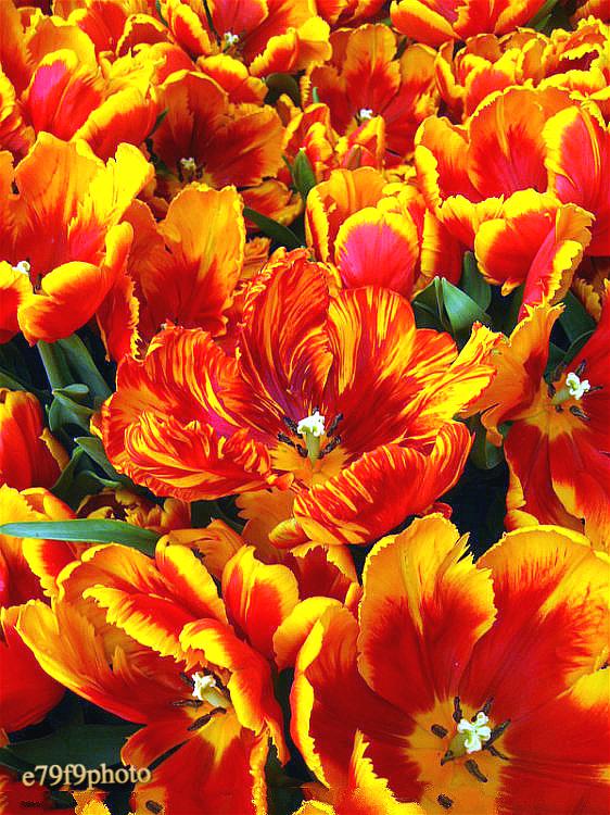 【晓鸣摄影】花卉如绘_图1-2