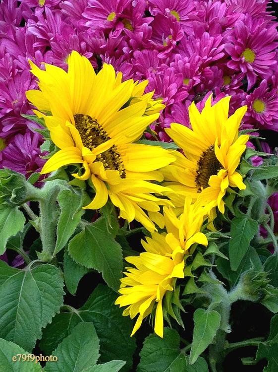 【晓鸣摄影】花卉如绘_图1-3