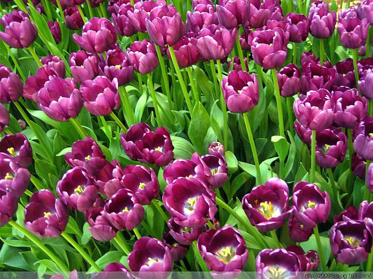 【晓鸣摄影】花卉如绘_图1-4