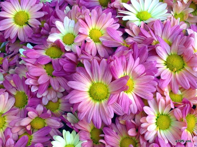 【晓鸣摄影】花卉如绘_图1-5
