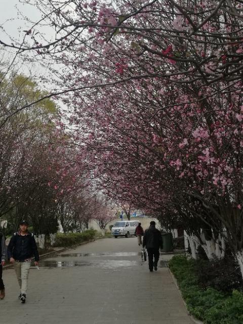滇之春_图1-3